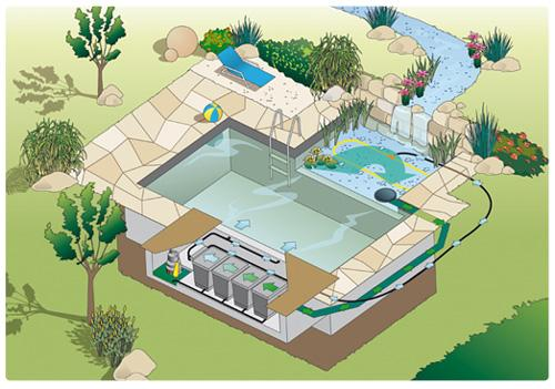 Construire sa piscine naturelle great construire sa for Piscine biologique